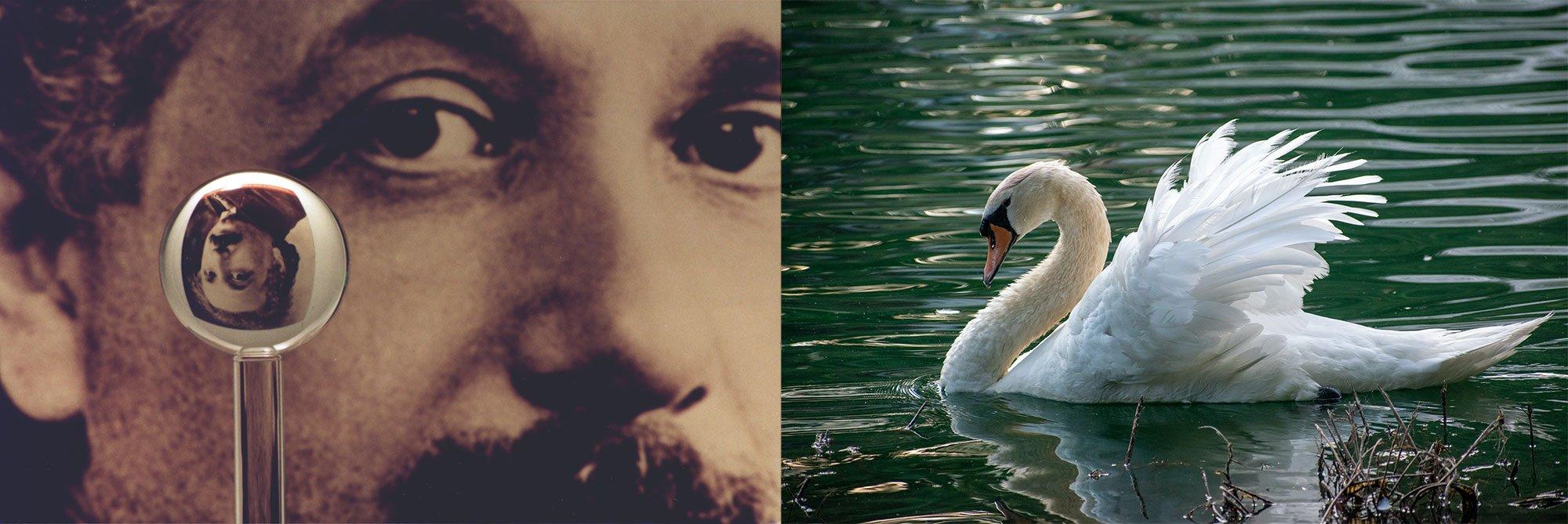 Einstein and the Swan