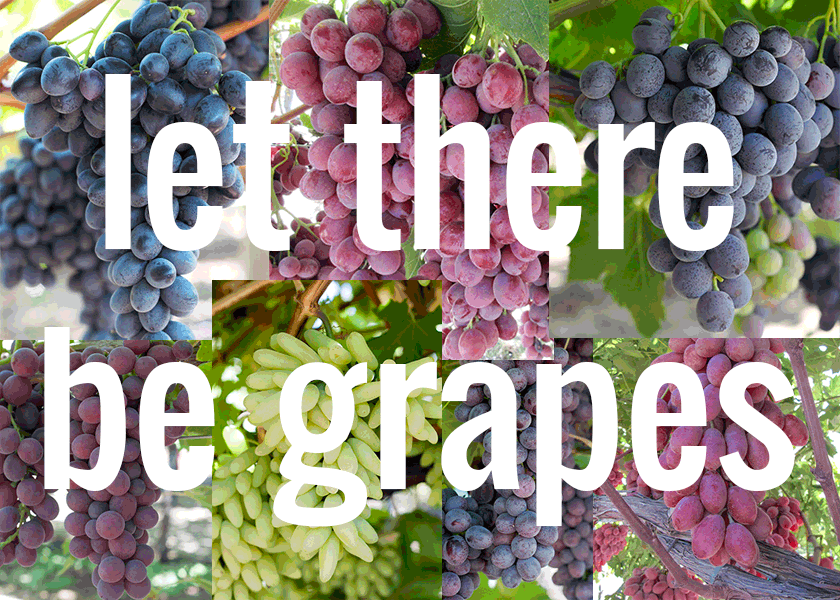 let there be grapes